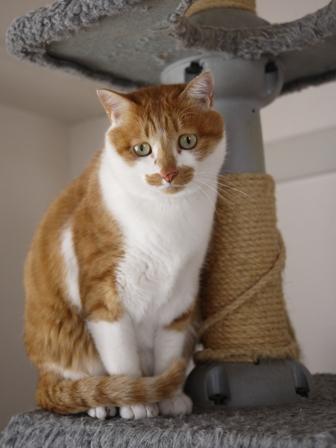 猫のお友だち ちゃーくんちょびくんペコちゃん編。_a0143140_2363662.jpg