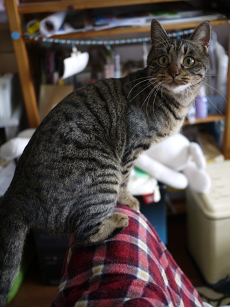 猫のお友だち ちゃーくんちょびくんペコちゃん編。_a0143140_2364066.jpg