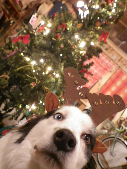 ☆クリスマスプレゼント☆_b0207642_18444519.jpg
