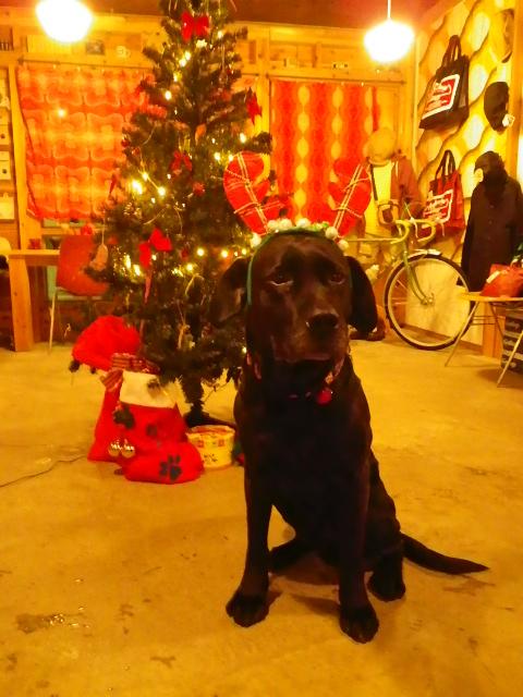 ☆クリスマスプレゼント☆_b0207642_18474212.jpg