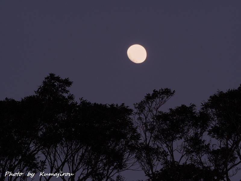 やんばるの森に浮かぶ月_b0192746_22194771.jpg