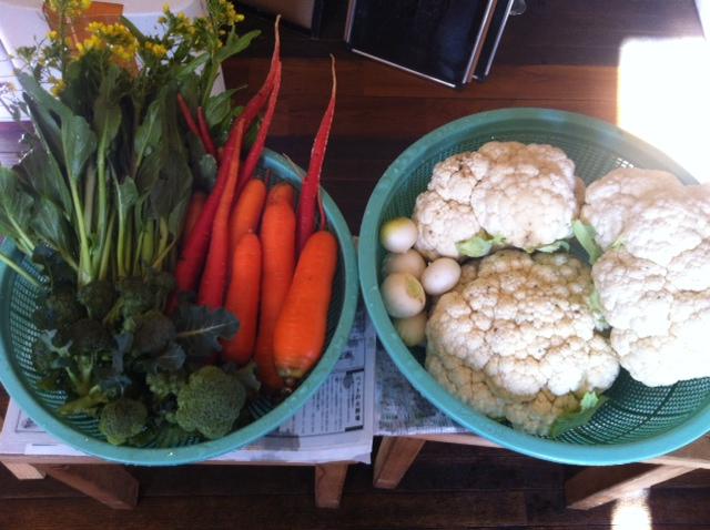 人参&アスパラ菜&ブロッコリー&蕪も・・収穫しました。_c0222448_1319878.jpg