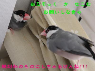 b0158061_20532190.jpg