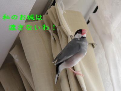 b0158061_2053611.jpg