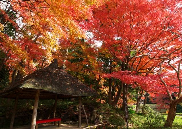 小石川後楽園 4_f0018464_1183576.jpg