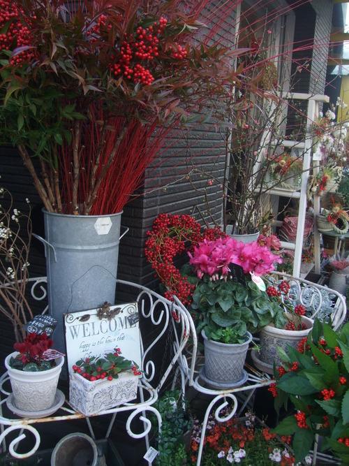 オークリーフ(お正月の花たち)_f0049672_10243834.jpg