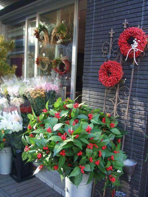 オークリーフ(お正月の花たち)_f0049672_10244988.jpg