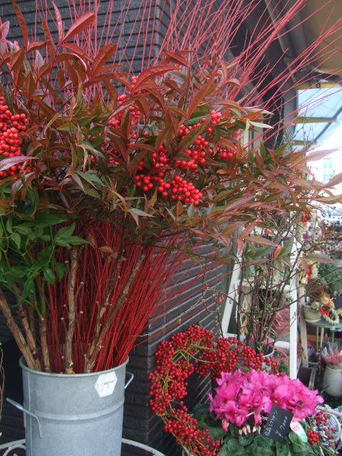 オークリーフ(お正月の花たち)_f0049672_10253558.jpg