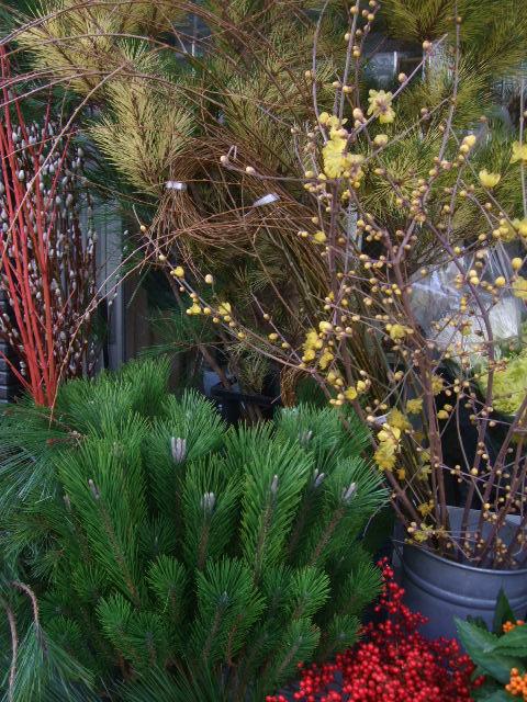 オークリーフ(お正月の花たち)_f0049672_10255173.jpg