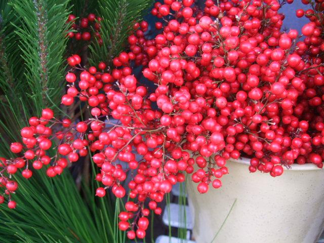 オークリーフ(お正月の花たち)_f0049672_10262252.jpg