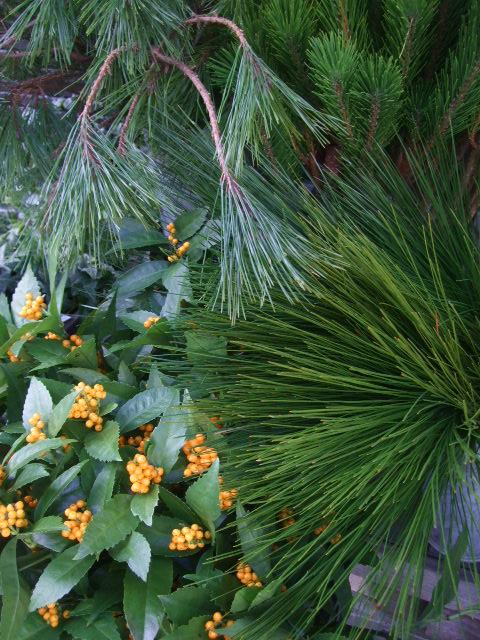 オークリーフ(お正月の花たち)_f0049672_10262490.jpg