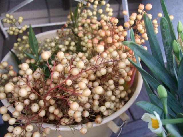 オークリーフ(お正月の花たち)_f0049672_10263978.jpg