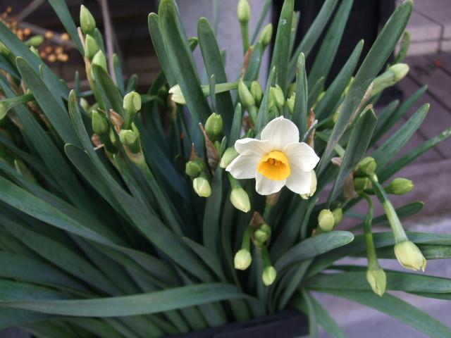 オークリーフ(お正月の花たち)_f0049672_1026889.jpg