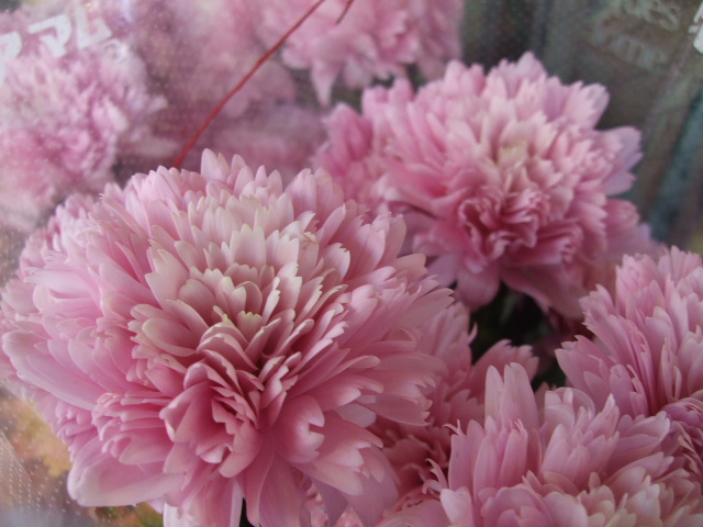 オークリーフ(お正月の花たち)_f0049672_10285440.jpg