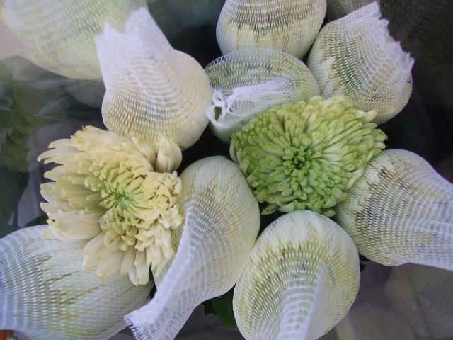 オークリーフ(お正月の花たち)_f0049672_10291324.jpg