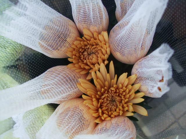 オークリーフ(お正月の花たち)_f0049672_10293163.jpg