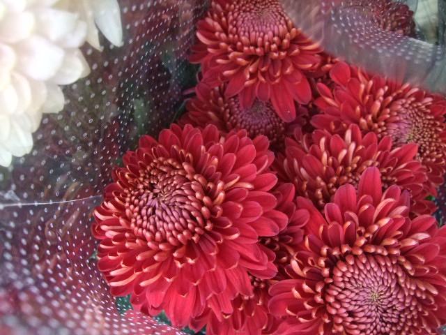 オークリーフ(お正月の花たち)_f0049672_10294258.jpg