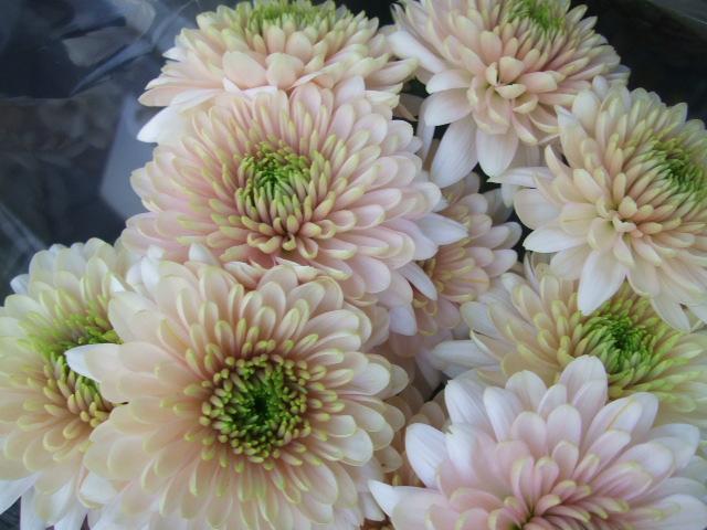 オークリーフ(お正月の花たち)_f0049672_10295258.jpg