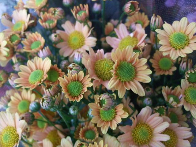 オークリーフ(お正月の花たち)_f0049672_1029546.jpg