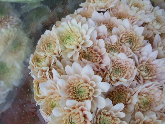 オークリーフ(お正月の花たち)_f0049672_1030034.jpg