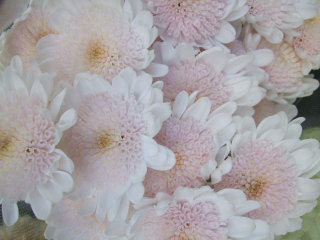 オークリーフ(お正月の花たち)_f0049672_10302224.jpg