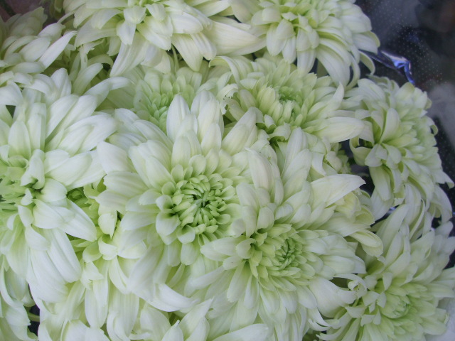 オークリーフ(お正月の花たち)_f0049672_1030860.jpg