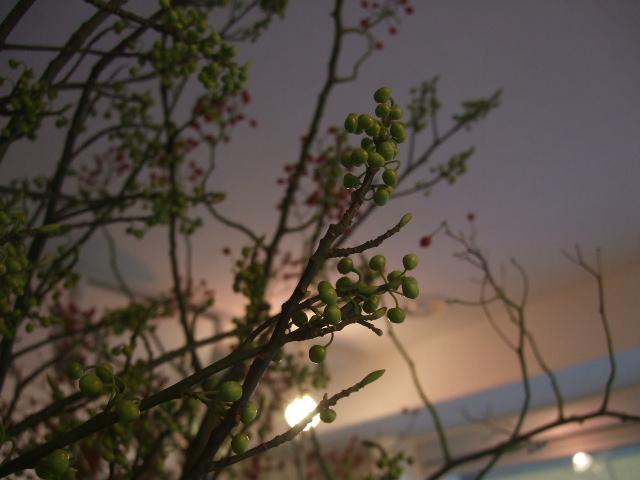 オークリーフ(お正月の花たち)_f0049672_10314965.jpg