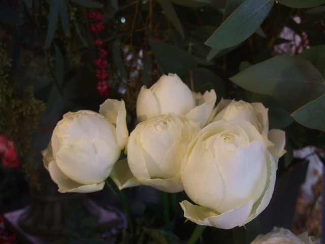 オークリーフ(お正月の花たち)_f0049672_10332196.jpg