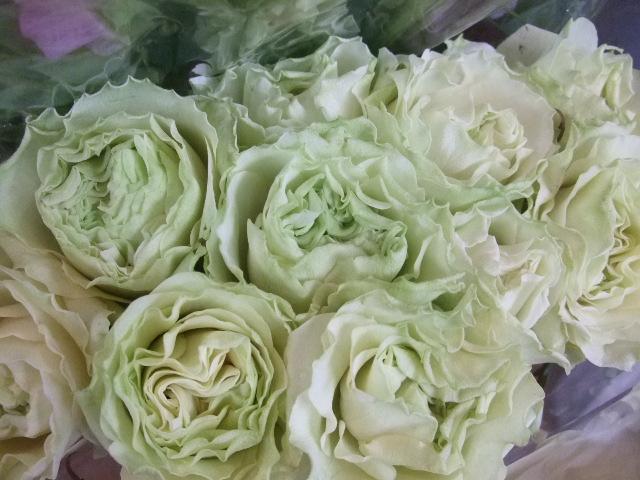 オークリーフ(お正月の花たち)_f0049672_1034681.jpg