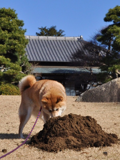 かぼちゃんパトロール_a0126590_511216.jpg