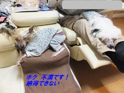 f0179203_847319.jpg