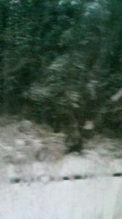 大雪だ!_e0094315_8181020.jpg