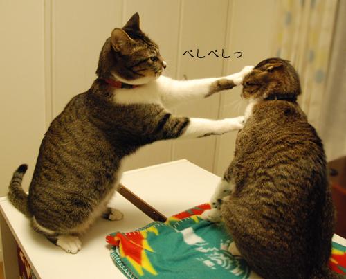 ネコ好きさんなら一度はくらってみたいかわいい猫パンチ