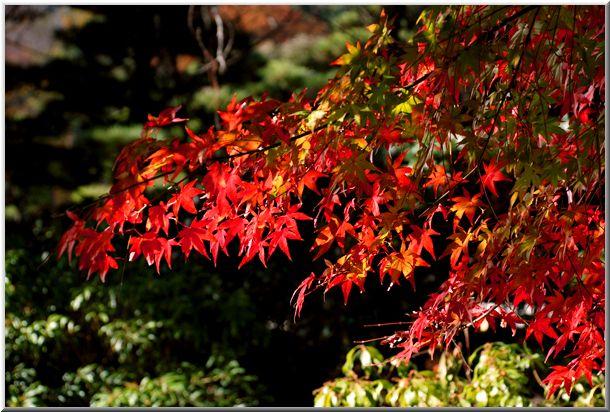 三渓園の紅葉(横浜市中区)_d0123528_2023413.jpg