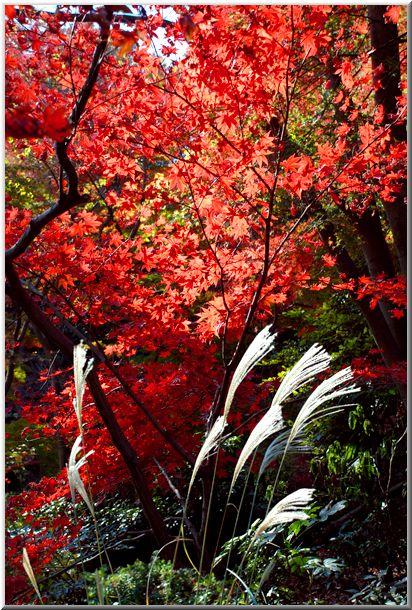 三渓園の紅葉(横浜市中区)_d0123528_20254499.jpg