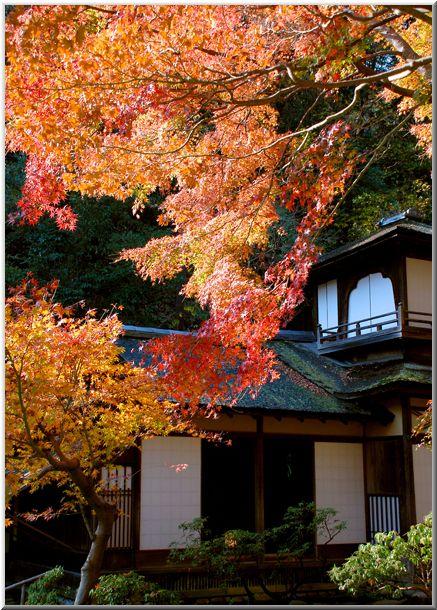 三渓園の紅葉(横浜市中区)_d0123528_2029476.jpg
