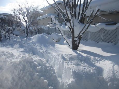 お庭も雪で埋まりそう_a0279743_13262999.jpg