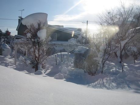 お庭も雪で埋まりそう_a0279743_13264774.jpg