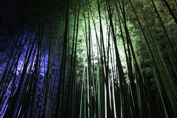 花灯路2012in嵐山_d0227044_1853666.jpg