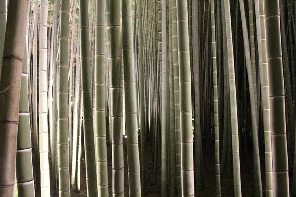 花灯路2012in嵐山_d0227044_1882958.jpg