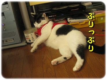 招き猫を壊したのは?_b0151748_1271188.jpg