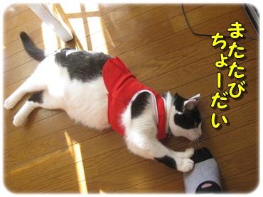 招き猫を壊したのは?_b0151748_1271470.jpg