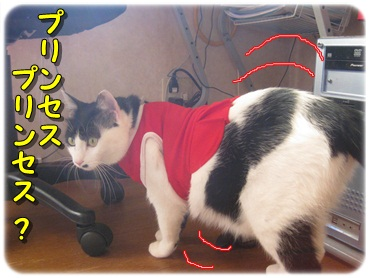 招き猫を壊したのは?_b0151748_12774.jpg