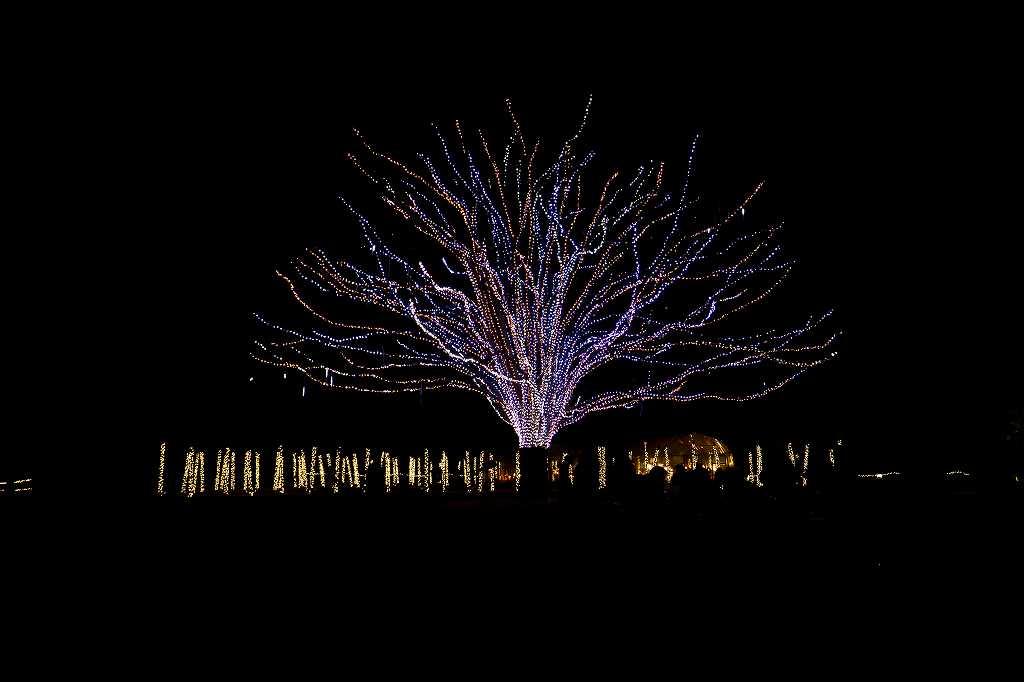 昭和記念公園のイルミ2_f0044056_8274373.jpg