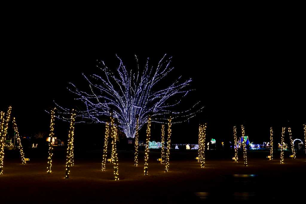 昭和記念公園のイルミ2_f0044056_828570.jpg