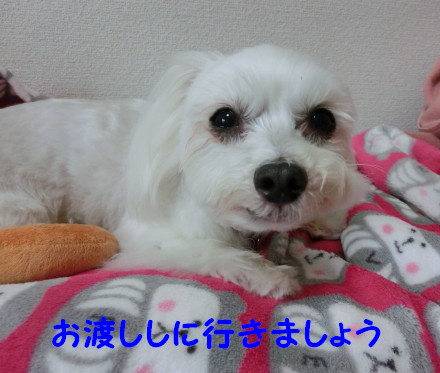 b0193480_2021666.jpg