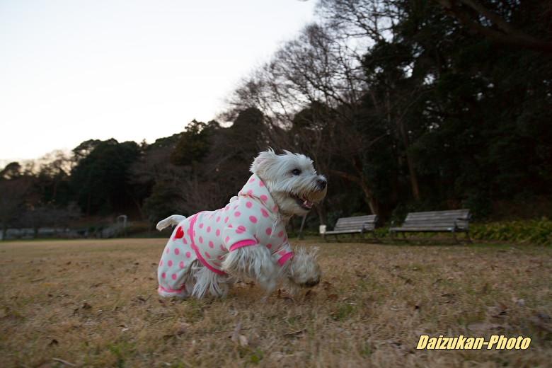 寒いですねぇ_d0167382_2265040.jpg