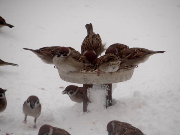 この冬もスズメの煙突風呂_a0136293_178781.jpg