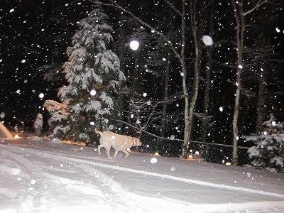 今シーズン初の雪遊び_e0192217_10461611.jpg