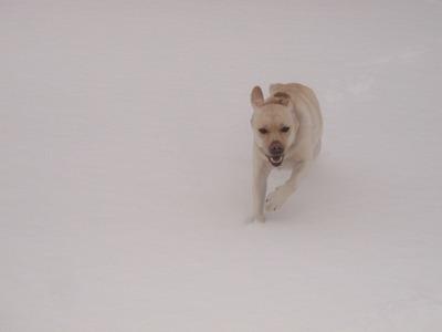 今シーズン初の雪遊び_e0192217_10512210.jpg